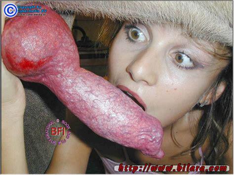 Animal porn dog sex, horse sex, zoo sex, beastiality jpg 510x382